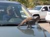 Hey, dude, get off my car!